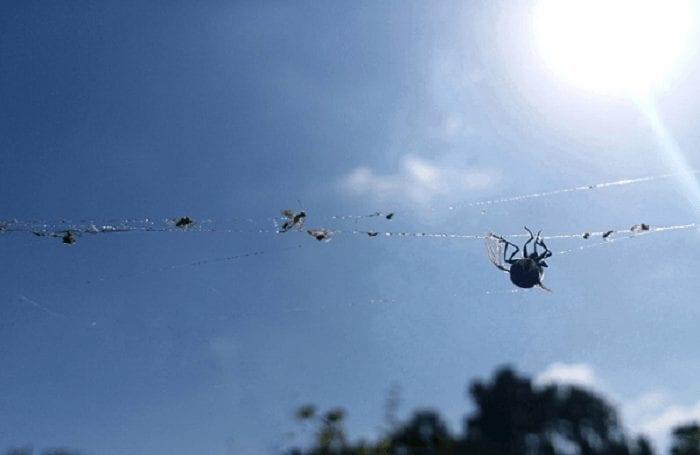 קורי עכביש משני צידי השביל בשמורת עין אפק